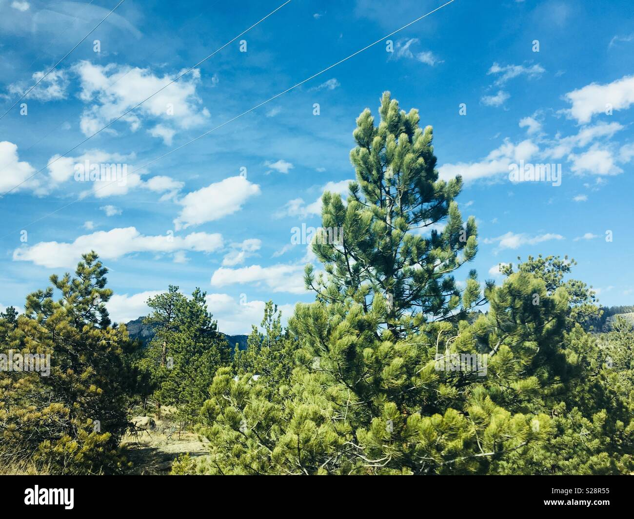 Evergreen trees in Estes Park, Colorado - Stock Image