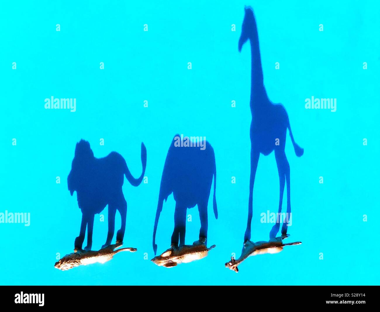 Wildlife figurines and shadows. - Stock Image