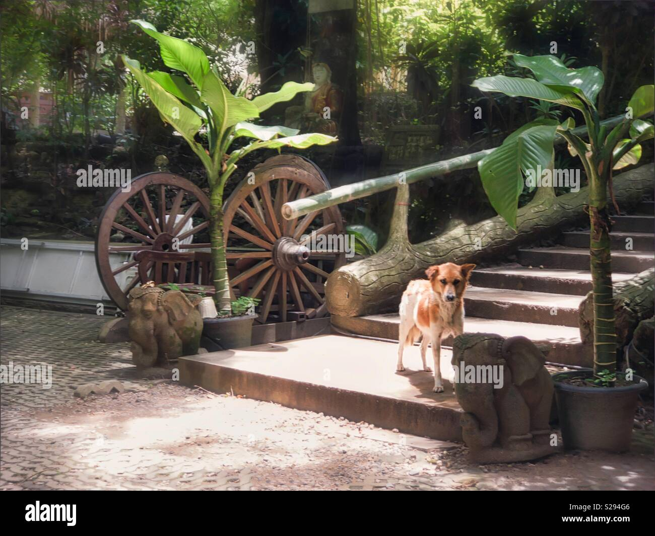 A temple dog stands at the bottom of the stair. Dogs are everywhere in Thailand Stock Photo