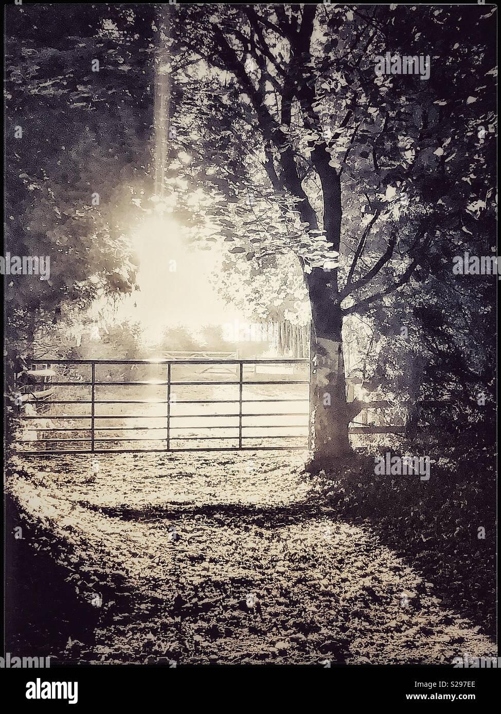 Morning sunshine in black and white - Stock Image