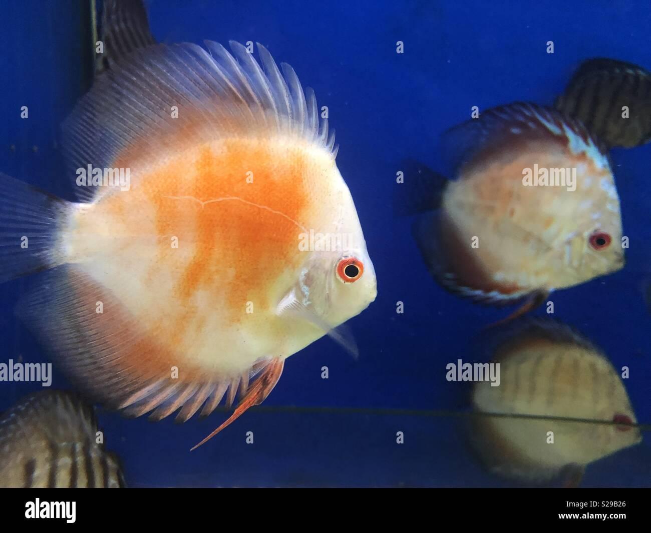 Aquarium view - Stock Image