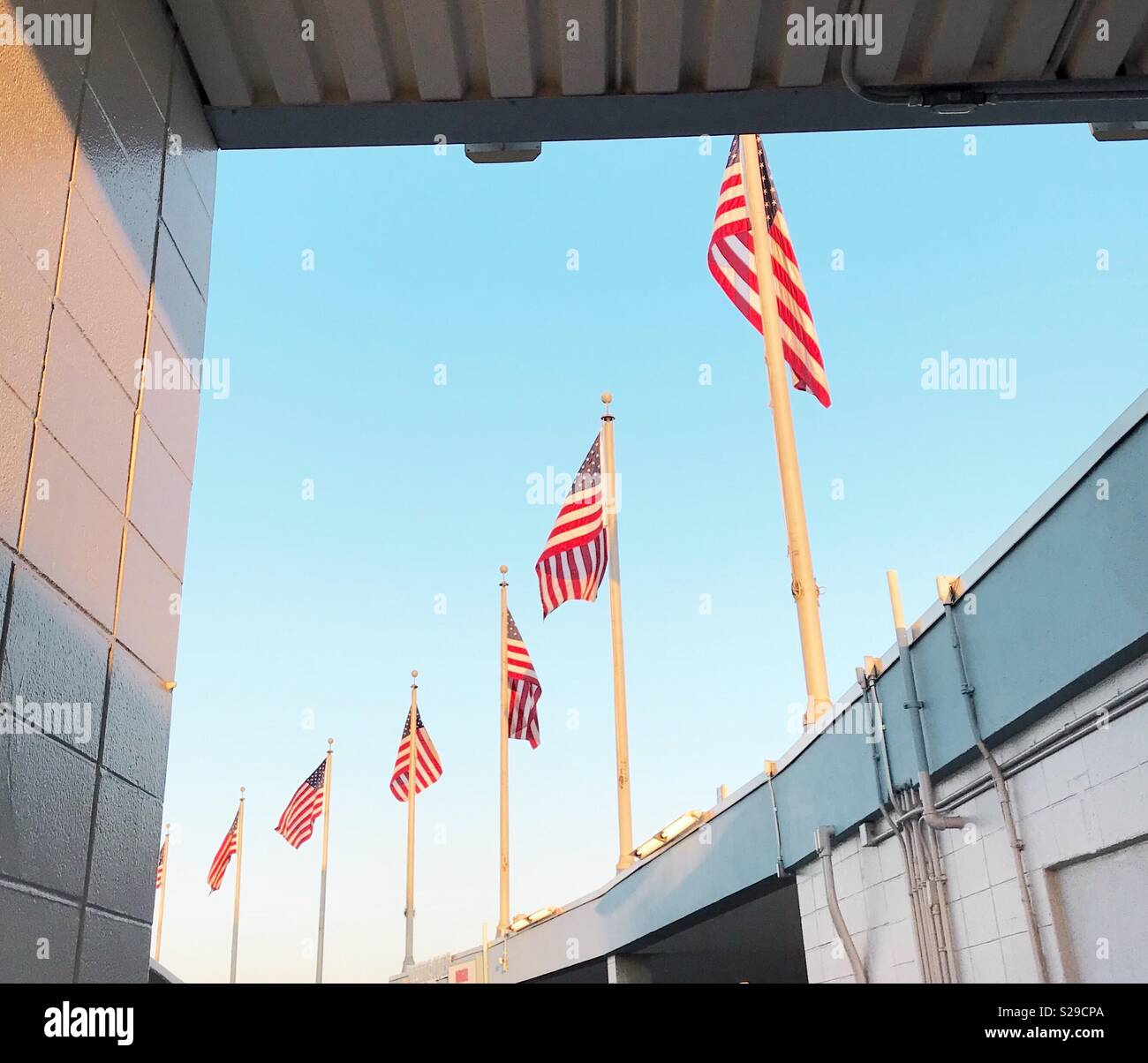 American flags flying in a group against blue sky. - Stock Image