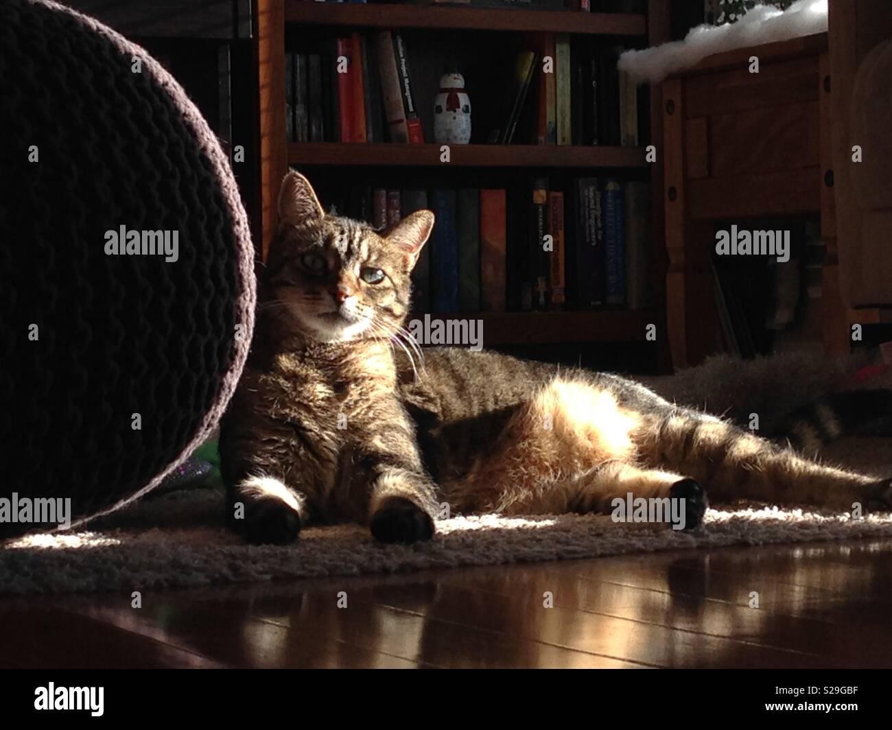Cat Basking in Sunlight - Stock Image