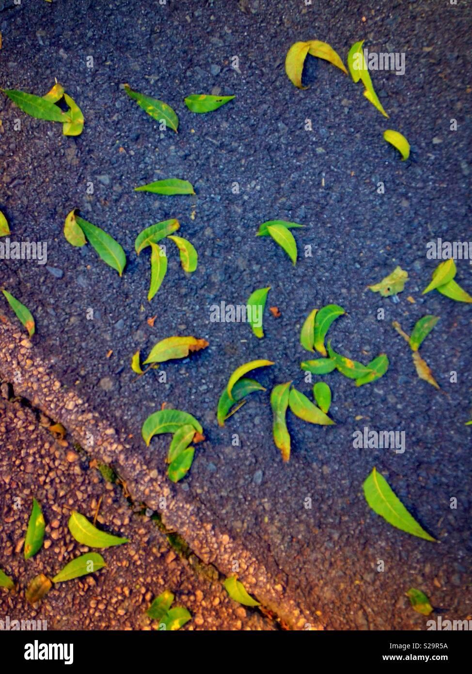 Bright green leaves on blacktop street look like paisley pattern Stock Photo