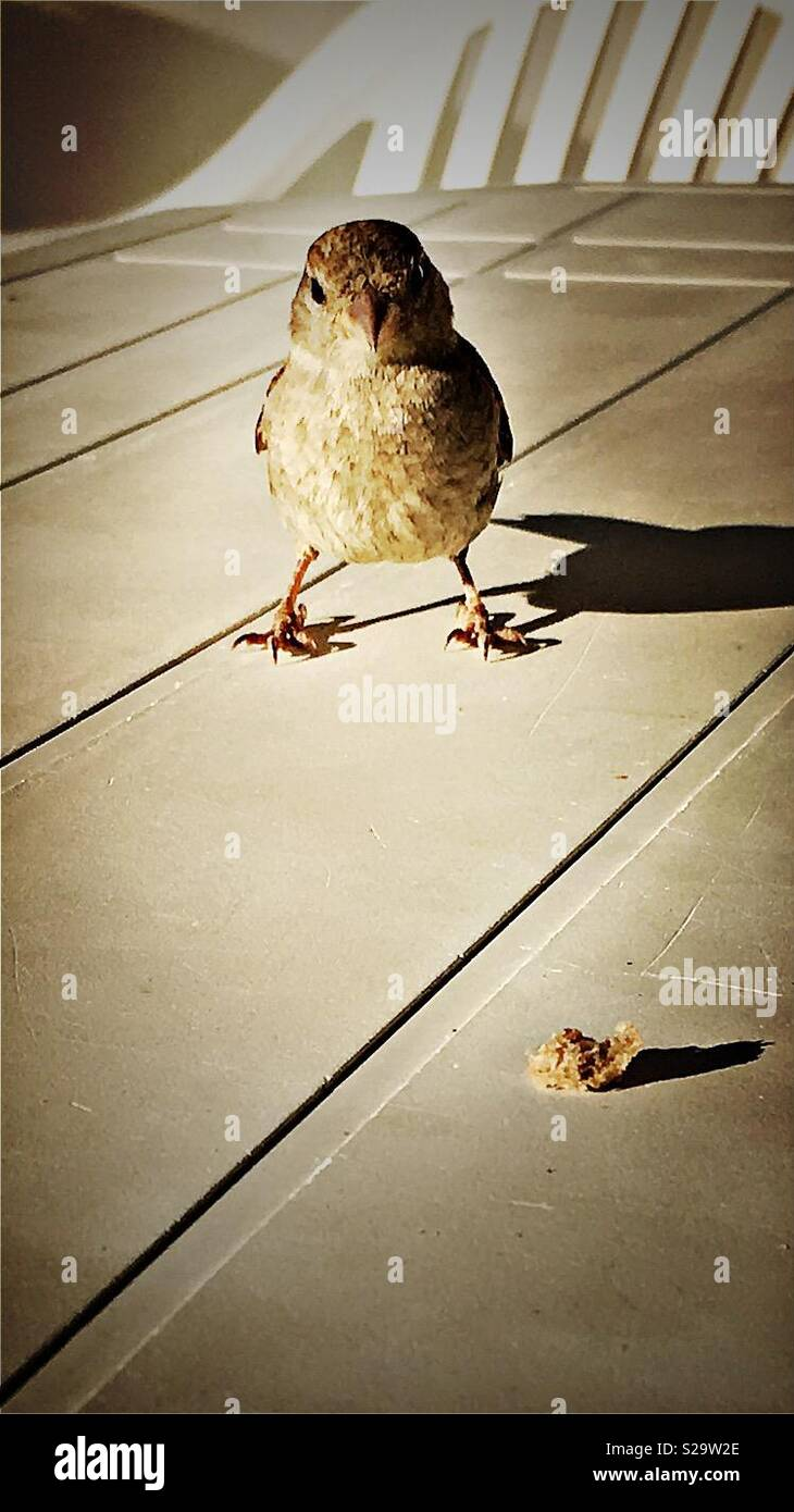 Bird on table - Stock Image