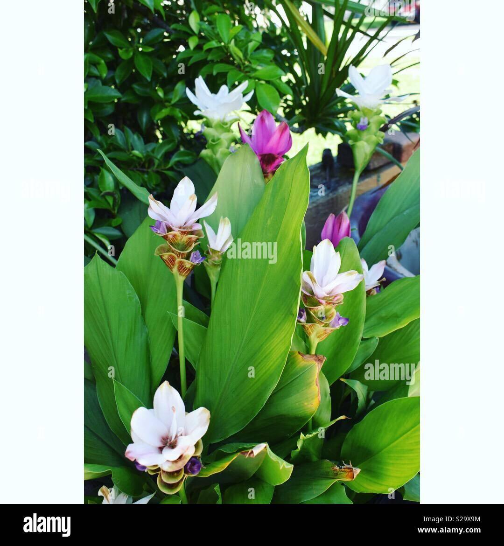 Beautiful exotic flowers stock photos beautiful exotic flowers beautiful exotic flowers stock image izmirmasajfo