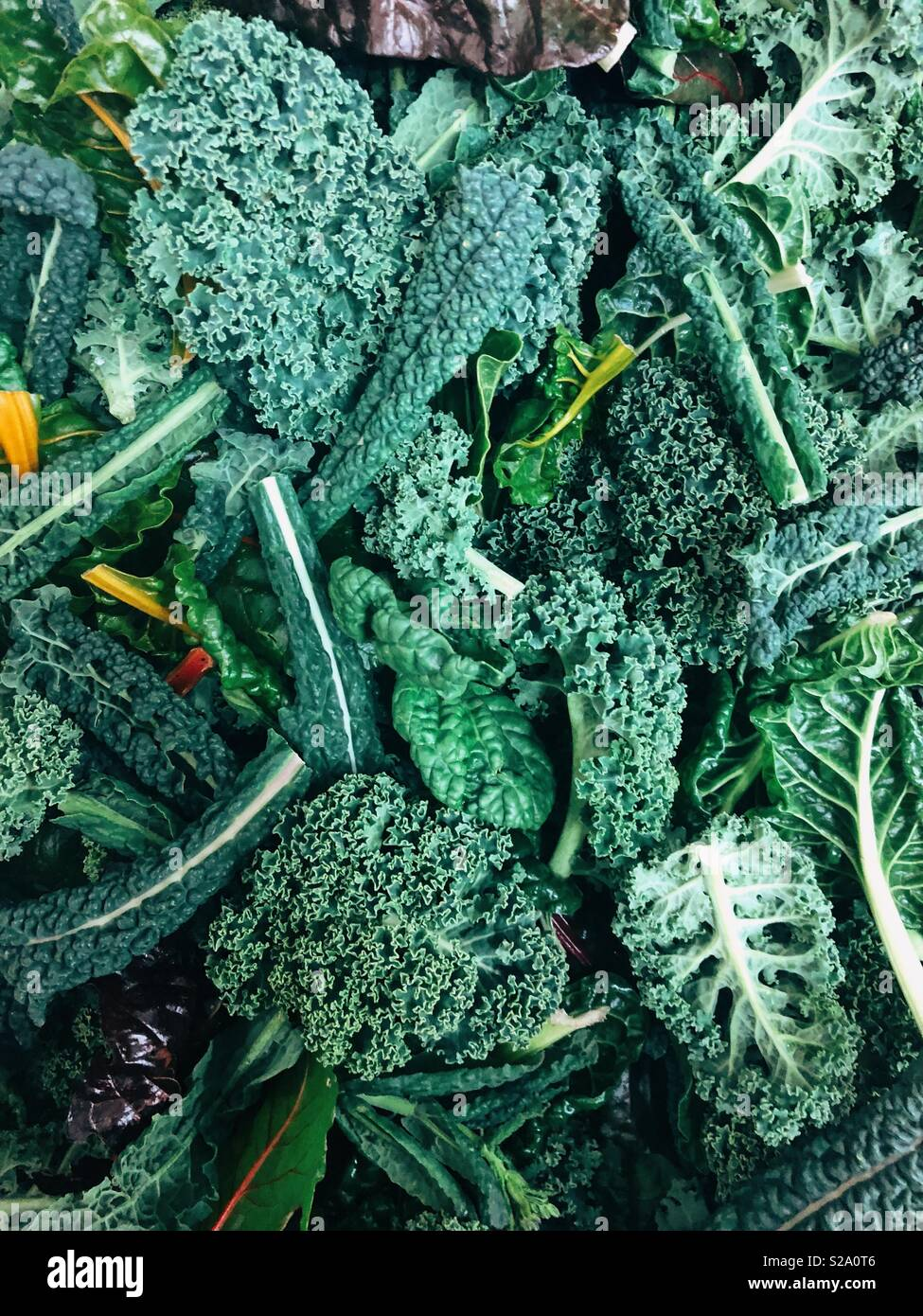 Mixed kale and silver beet - Stock Image
