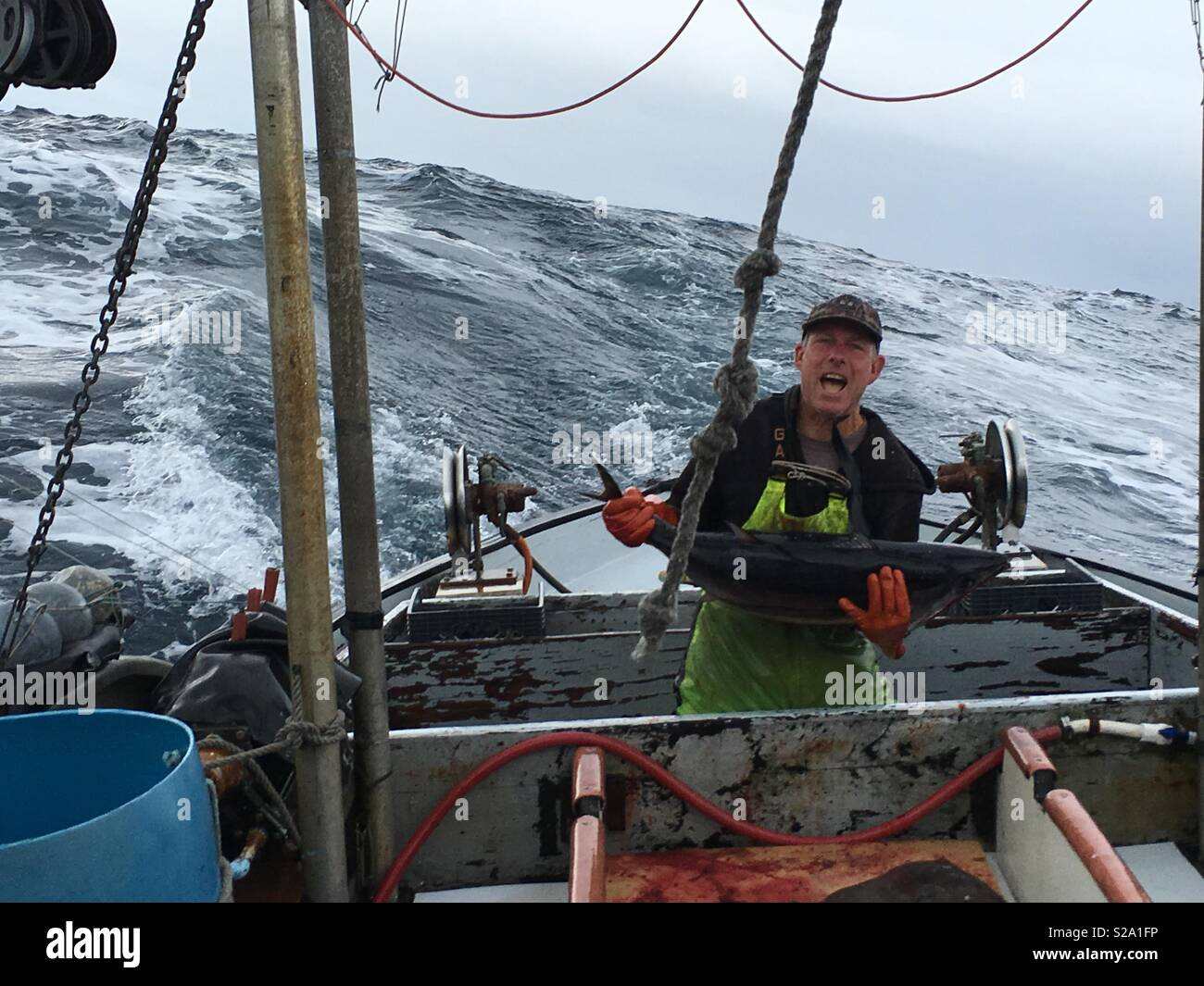 Fearless independent commercial fisherman lands albacore tuna on the deck of his 100 year old wooden fishing vessel in rough weather. - Stock Image