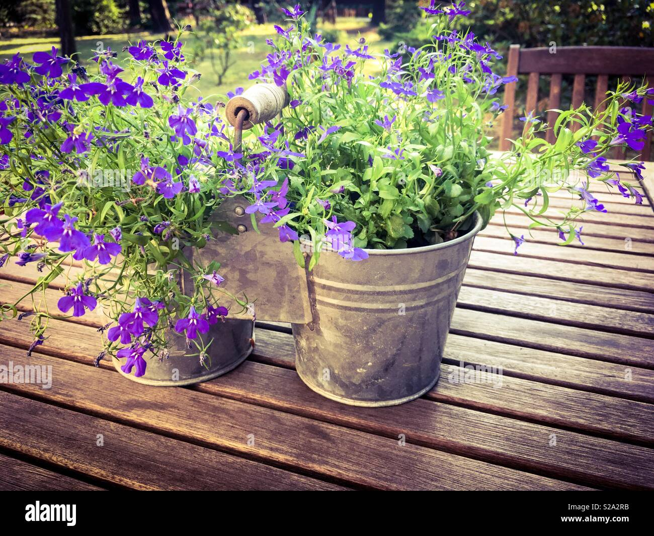 Flower Pot As A Purple Table Decoration Stock Photo 311237679 Alamy