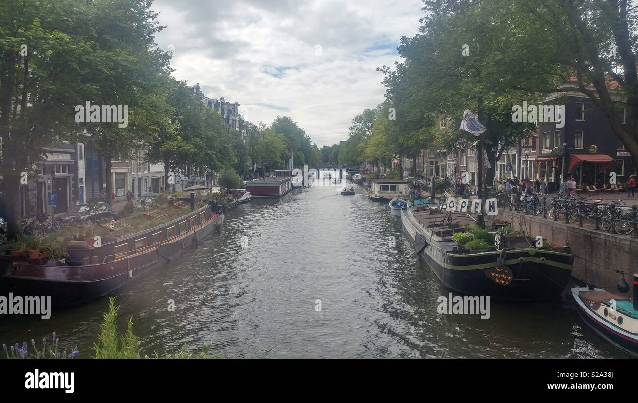 The entanglement of greenery and modern structures in the canals of Amsterdam - Stock Image