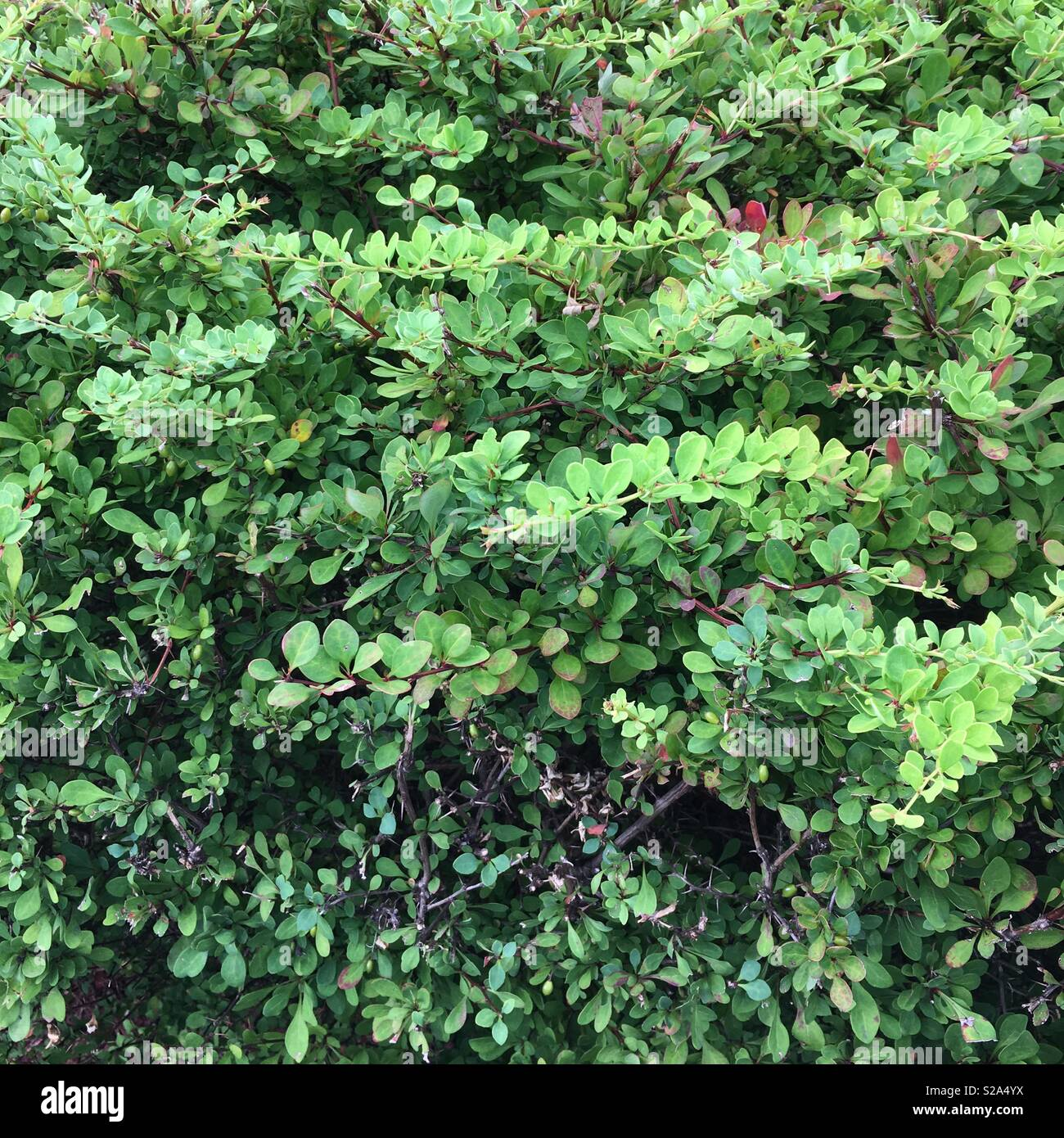 Shrubbery - Stock Image