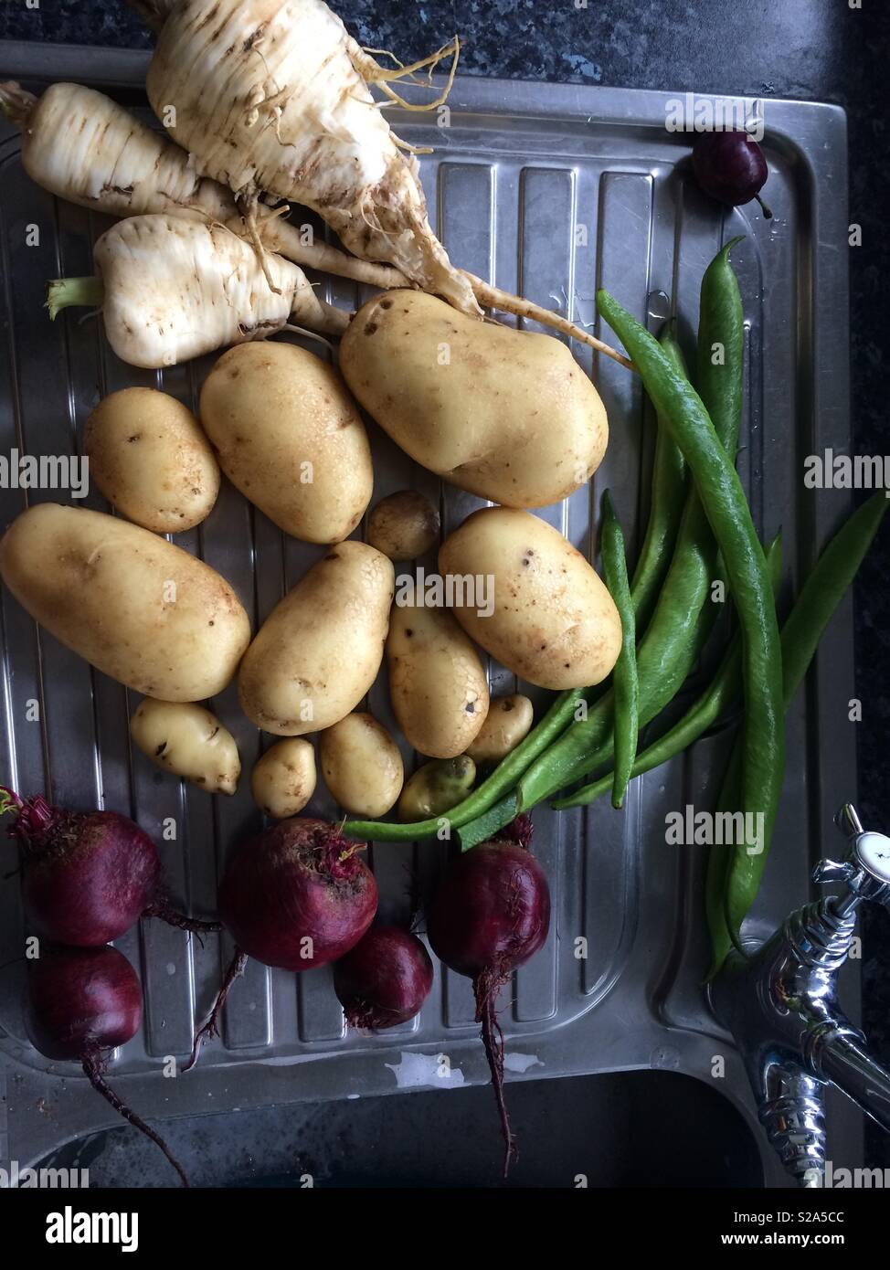 Self sufficient food for free allotment vegetables potatoes beans radishes parsnips - Stock Image