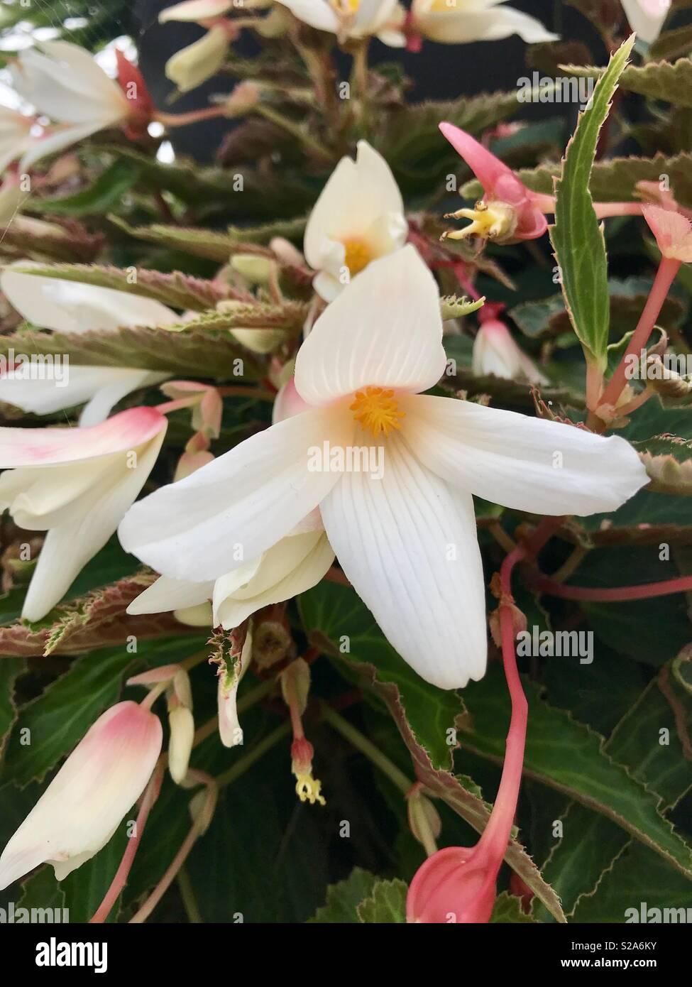 Cascading Flowers Stock Photos Cascading Flowers Stock Images Alamy