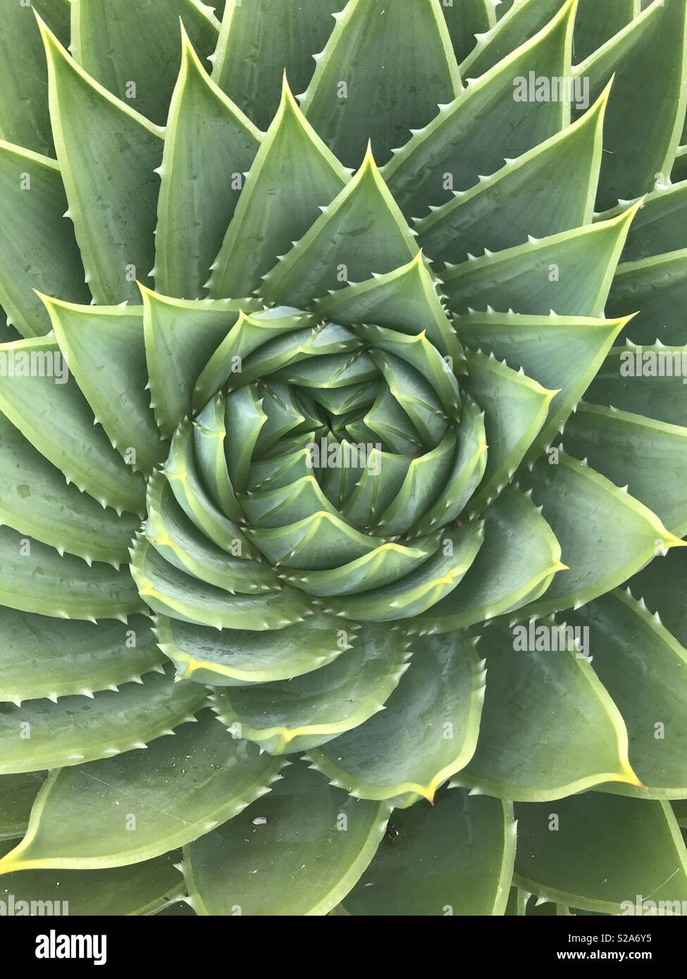 Aesthetic Succulent High Resolution Stock Photography And Images Alamy