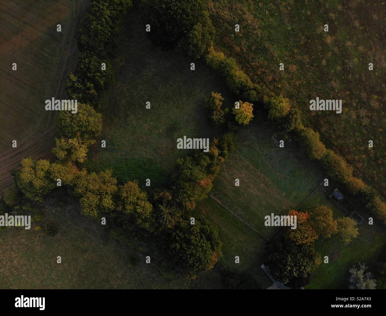 Aerial top down view of hedges and trees as autumn approaches in early morning warm light - Stock Image