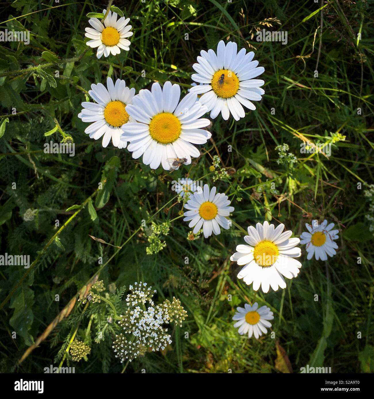 Summertime and it's colorful flowers somewhere in Dalarna, Sweden. Stock Photo