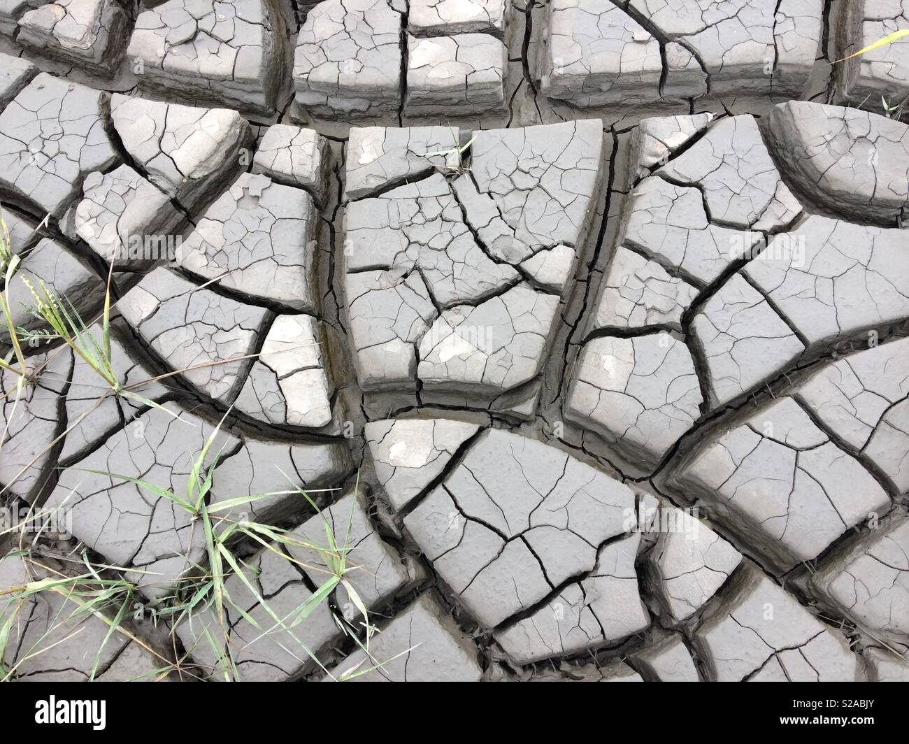 Life in dryness - Stock Image
