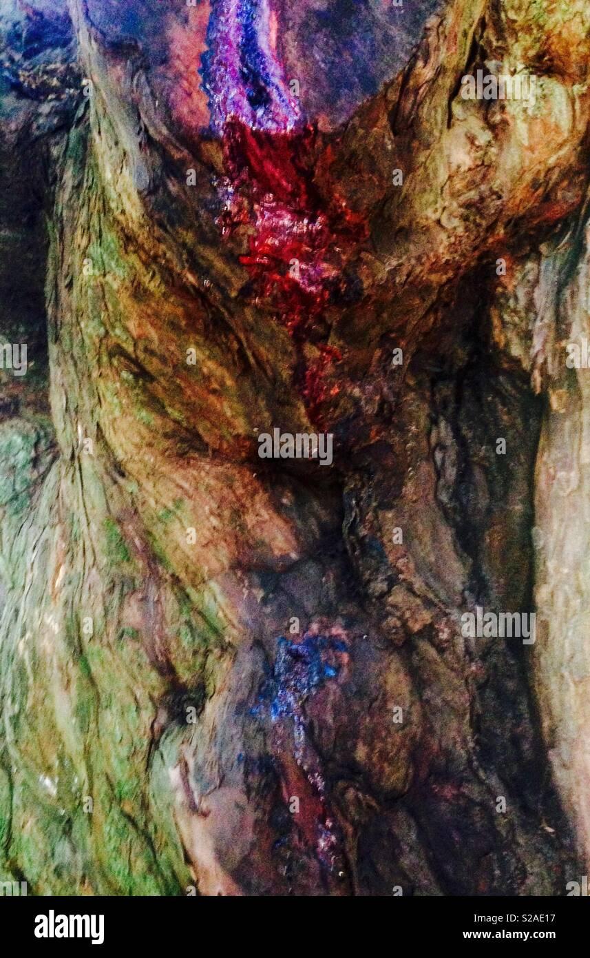 Tree bleeding