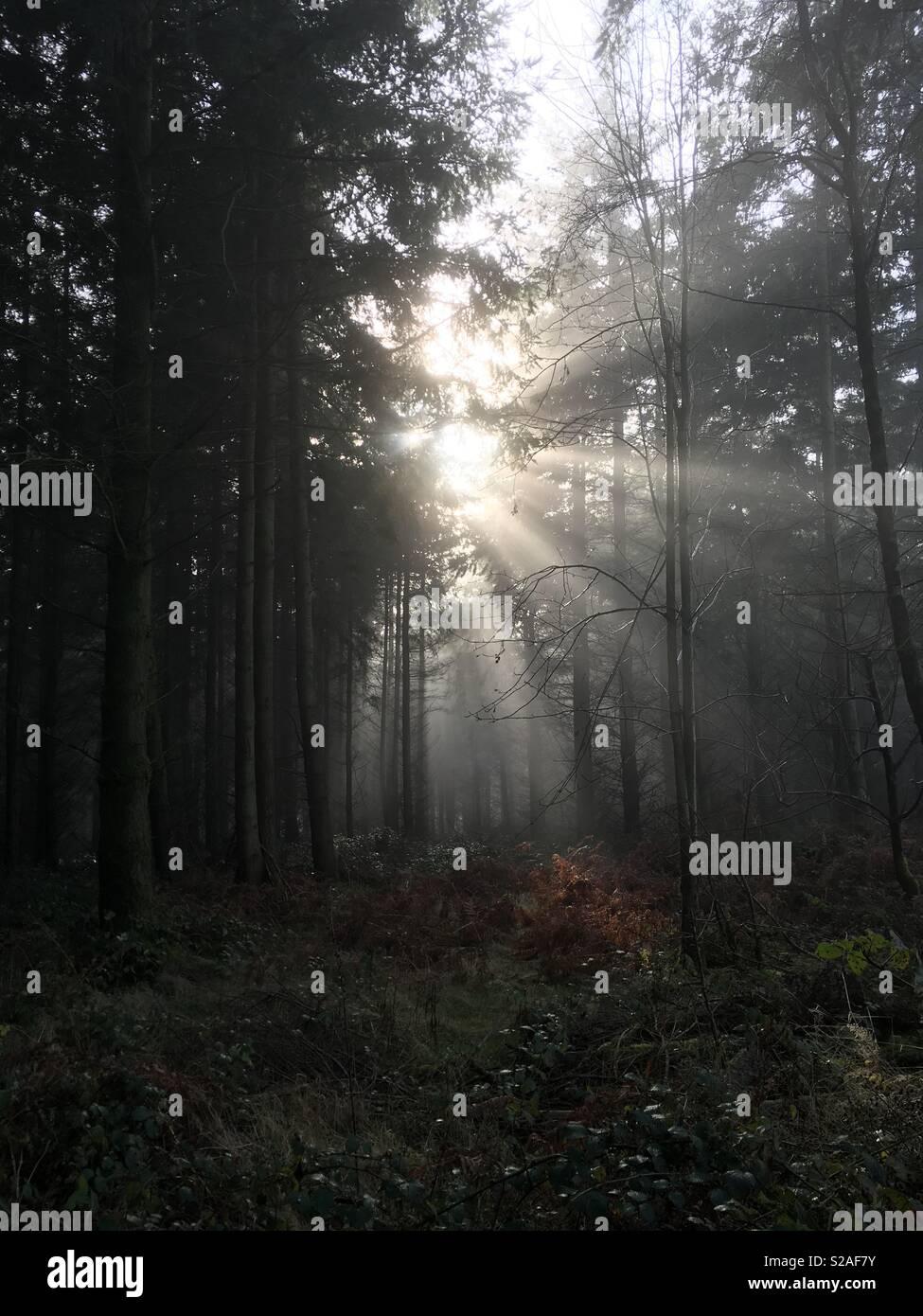 Misty mornings - Stock Image