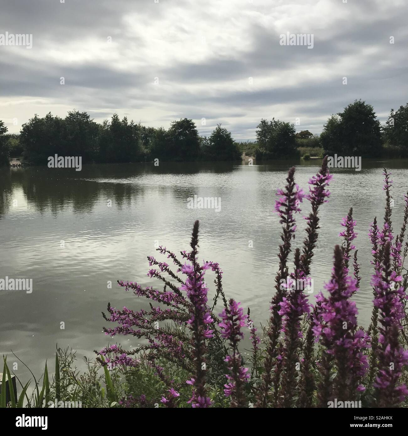 Langdon Hills Nature Reserve - Stock Image
