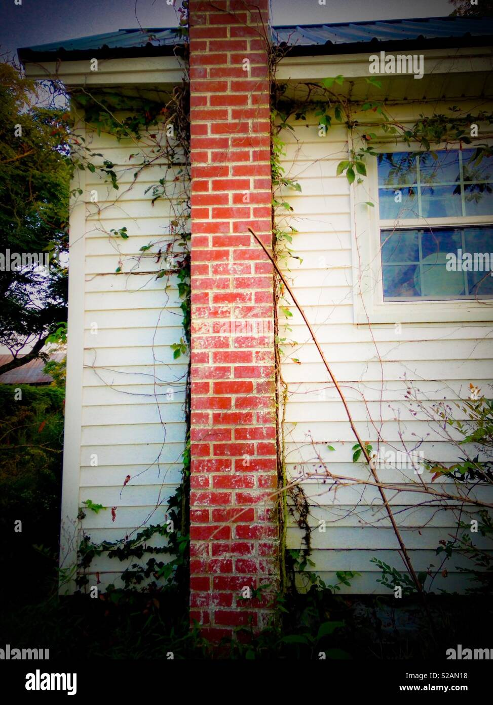 Benign neglect in the form of vines and weeds on side of old white house with chimney - Stock Image