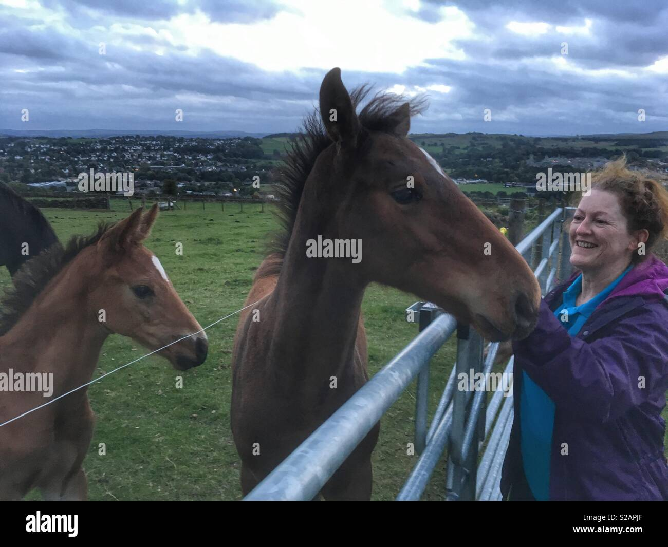 A woman greeted by two foals at the gate of a field in Guiseley West Yorkshire - Stock Image