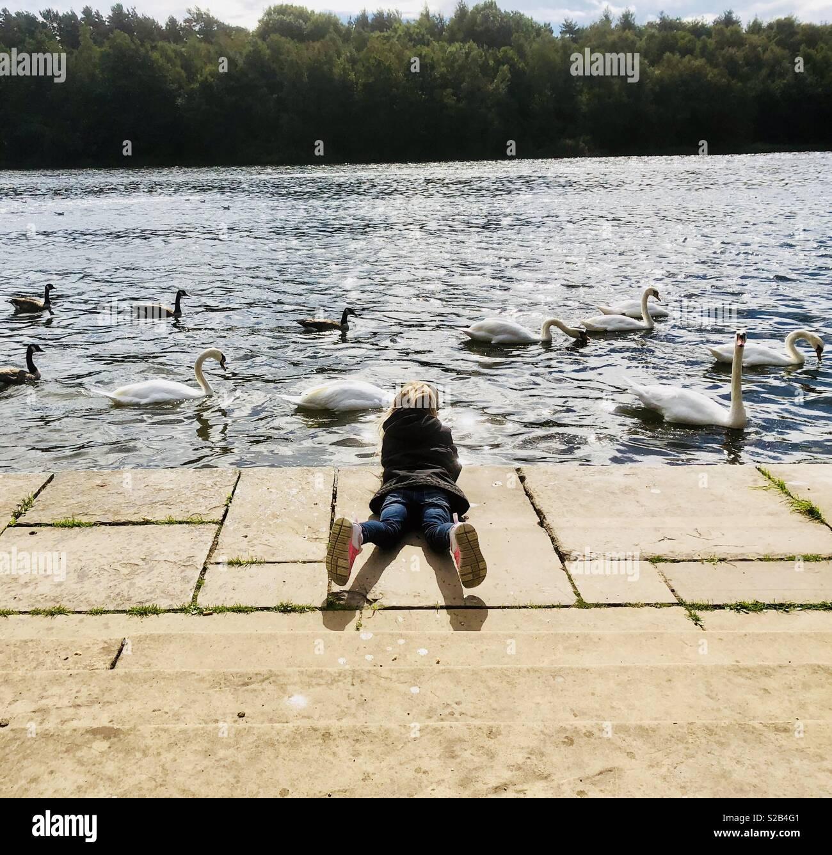 Little girl watching swans - Stock Image