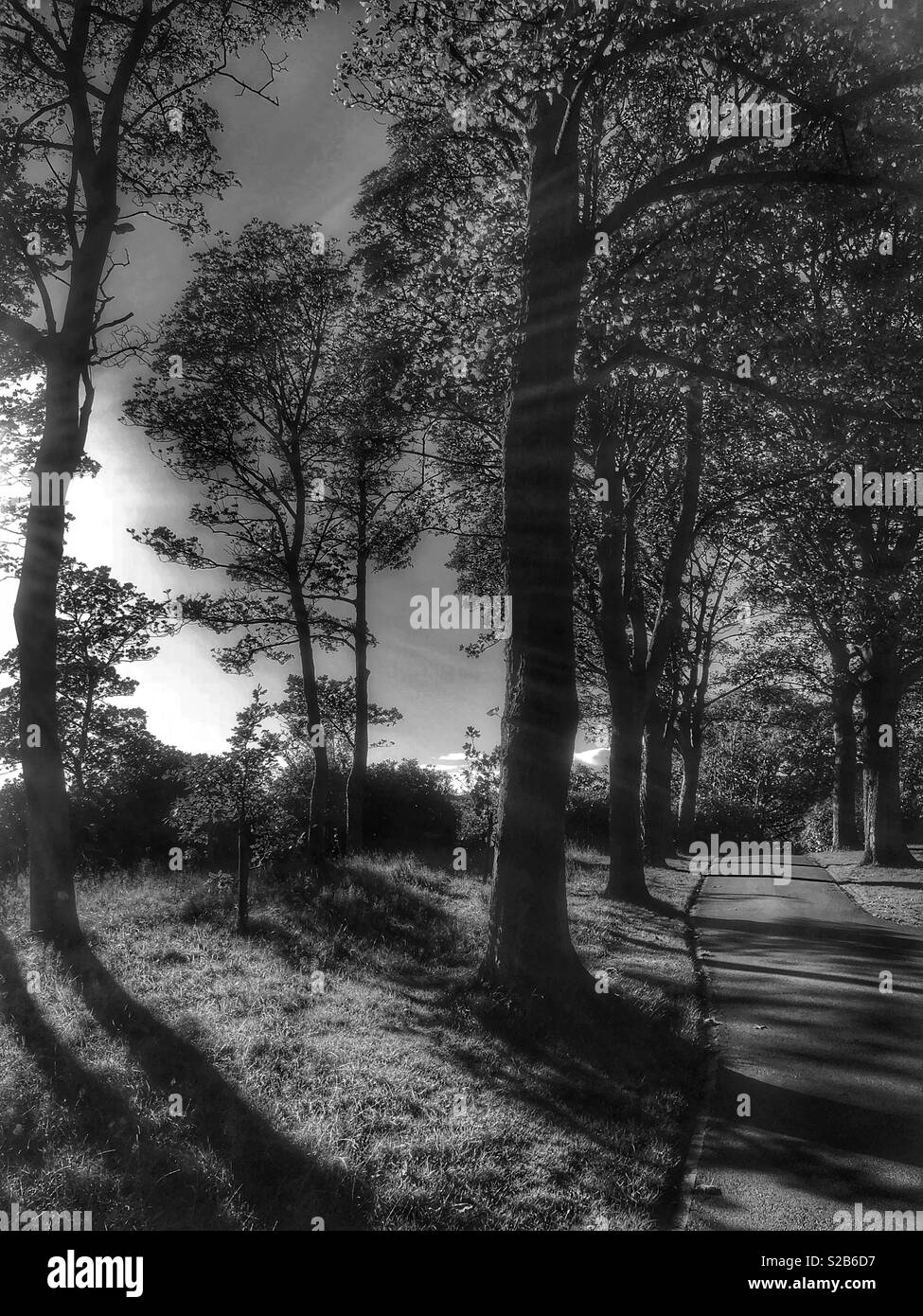 Trees in a park in England at autumn time, shot in black and white - Stock Image