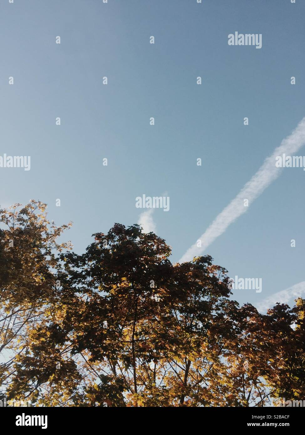 Looking up at autumnal tree in the sun and sky - Stock Image