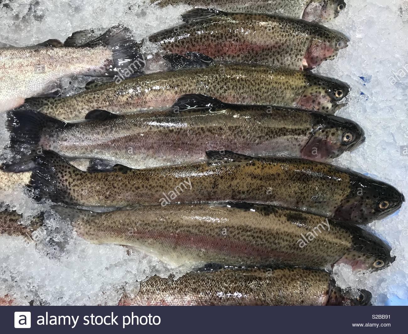 Trout fishing freshwater fish food - Stock Image