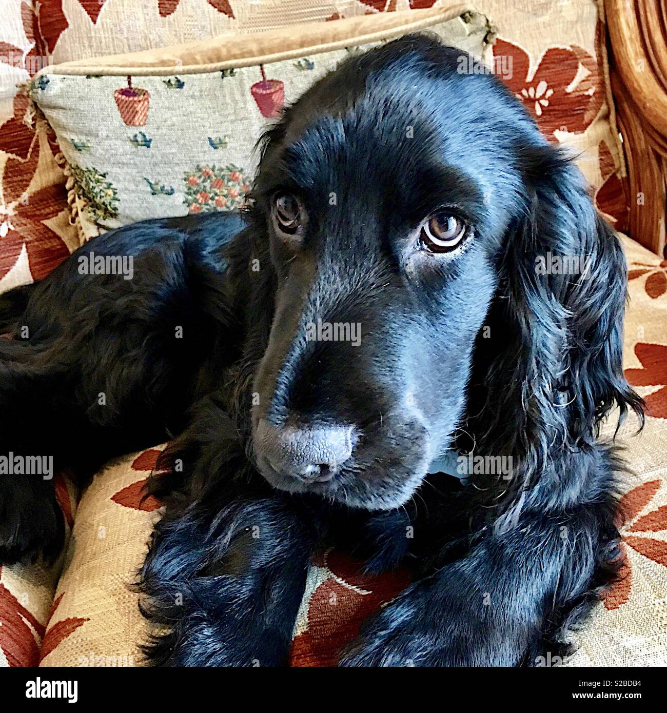 Man's best friend - Stock Image