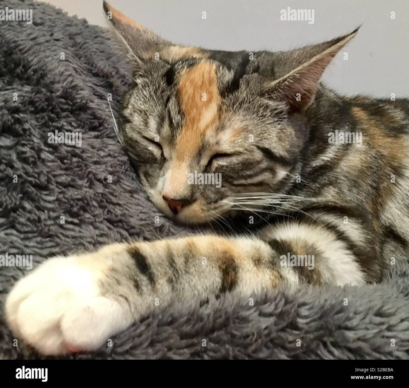 Catnap - Stock Image