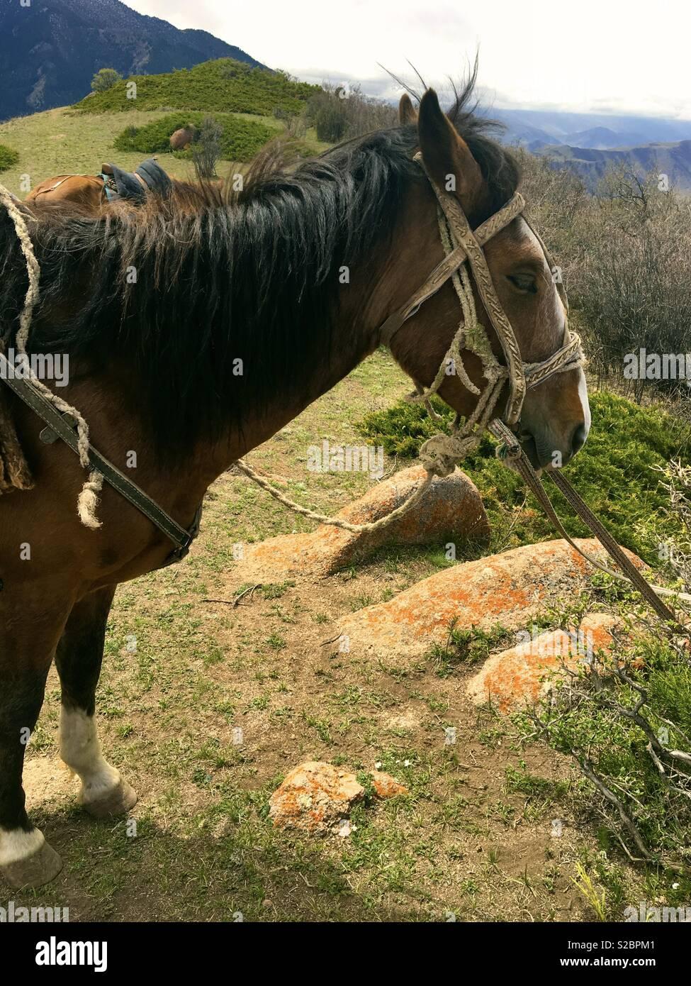 Kyrgyz horse on a mountain trek - Stock Image