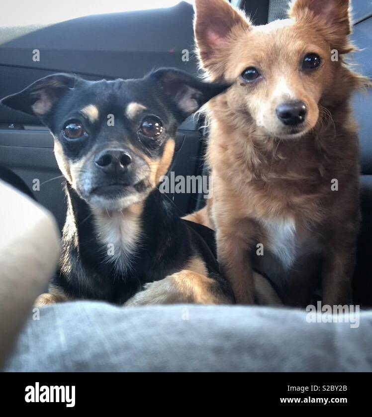 Dogs waiting patiently - Stock Image