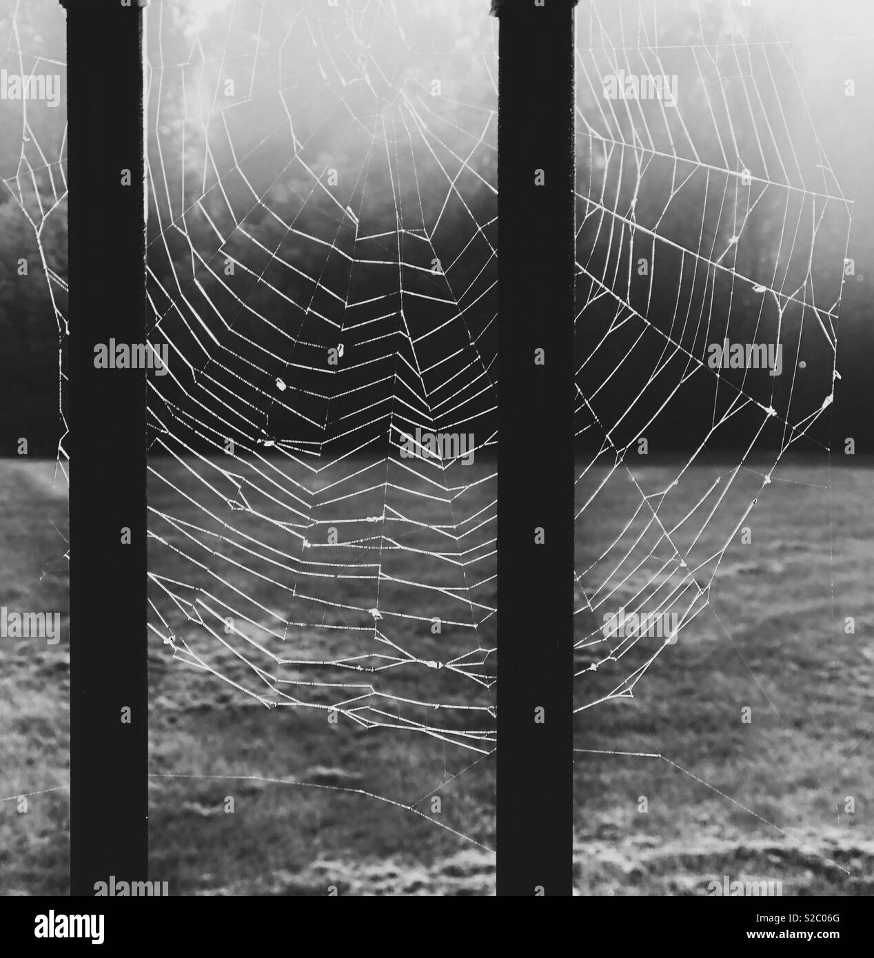 Black and white image of spiderweb illuminated by light - Stock Image