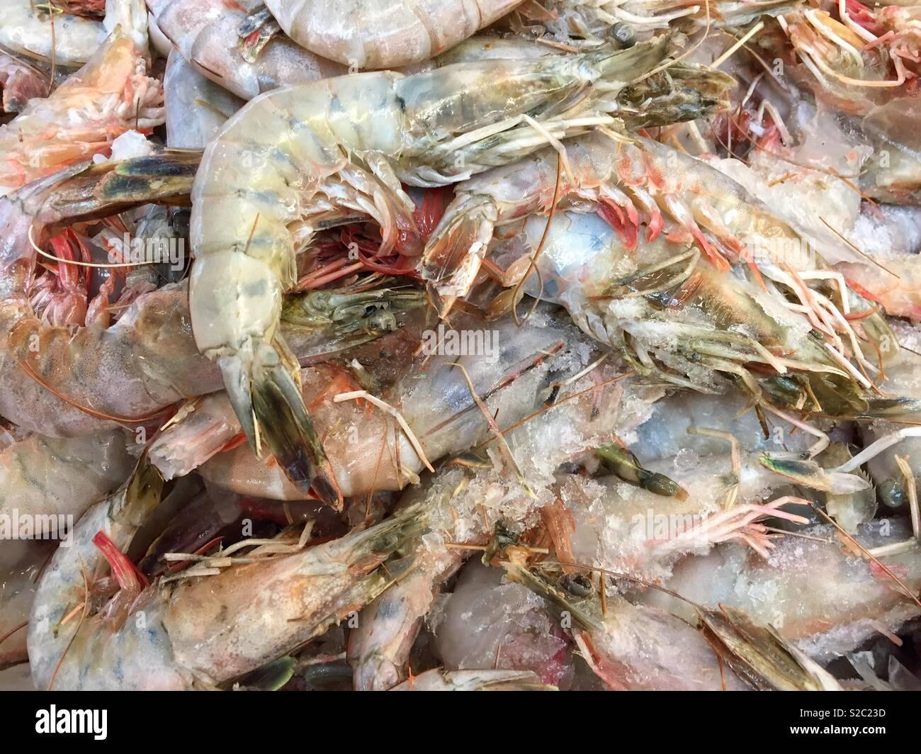 Colossal Shrimp Stock Photos & Colossal Shrimp Stock Images