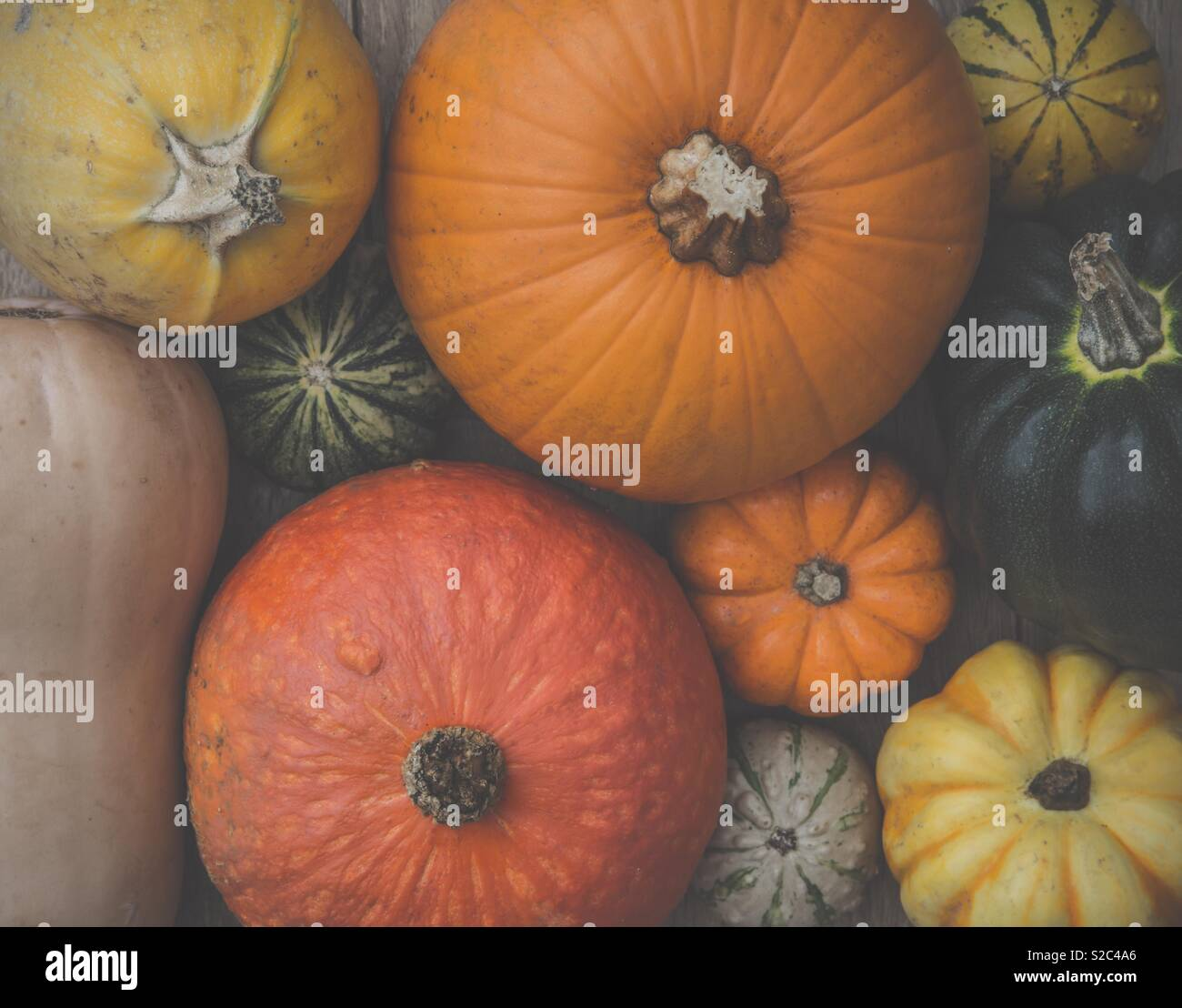 A selection of different pumpkins, gourds and winter squash in a full frame food background image - Stock Image