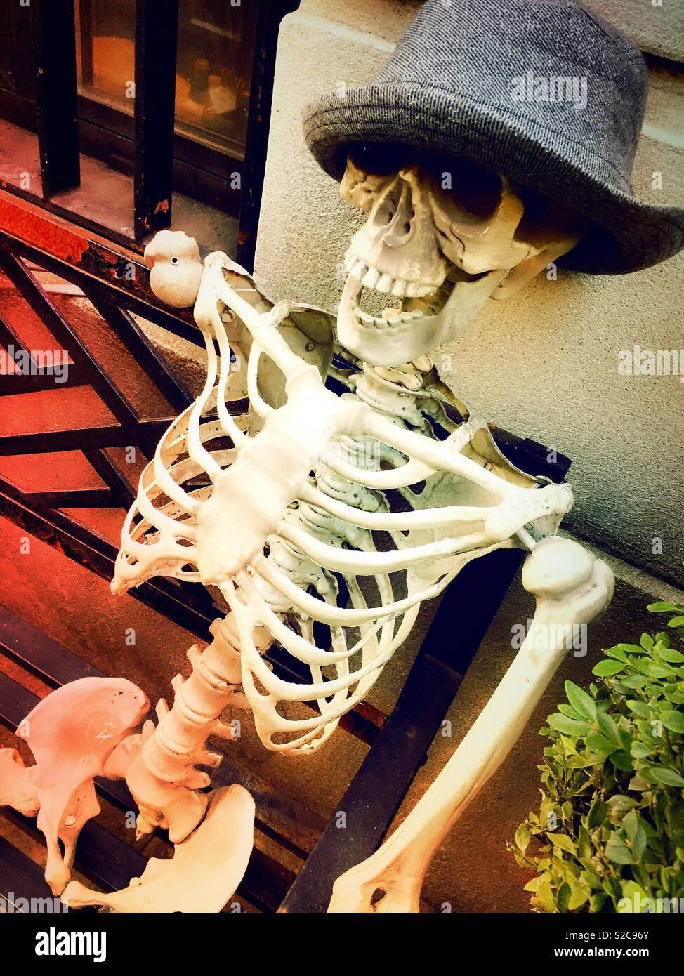 9b6b23ce1fab2 Skeleton Wearing Hat Stock Photos   Skeleton Wearing Hat Stock ...