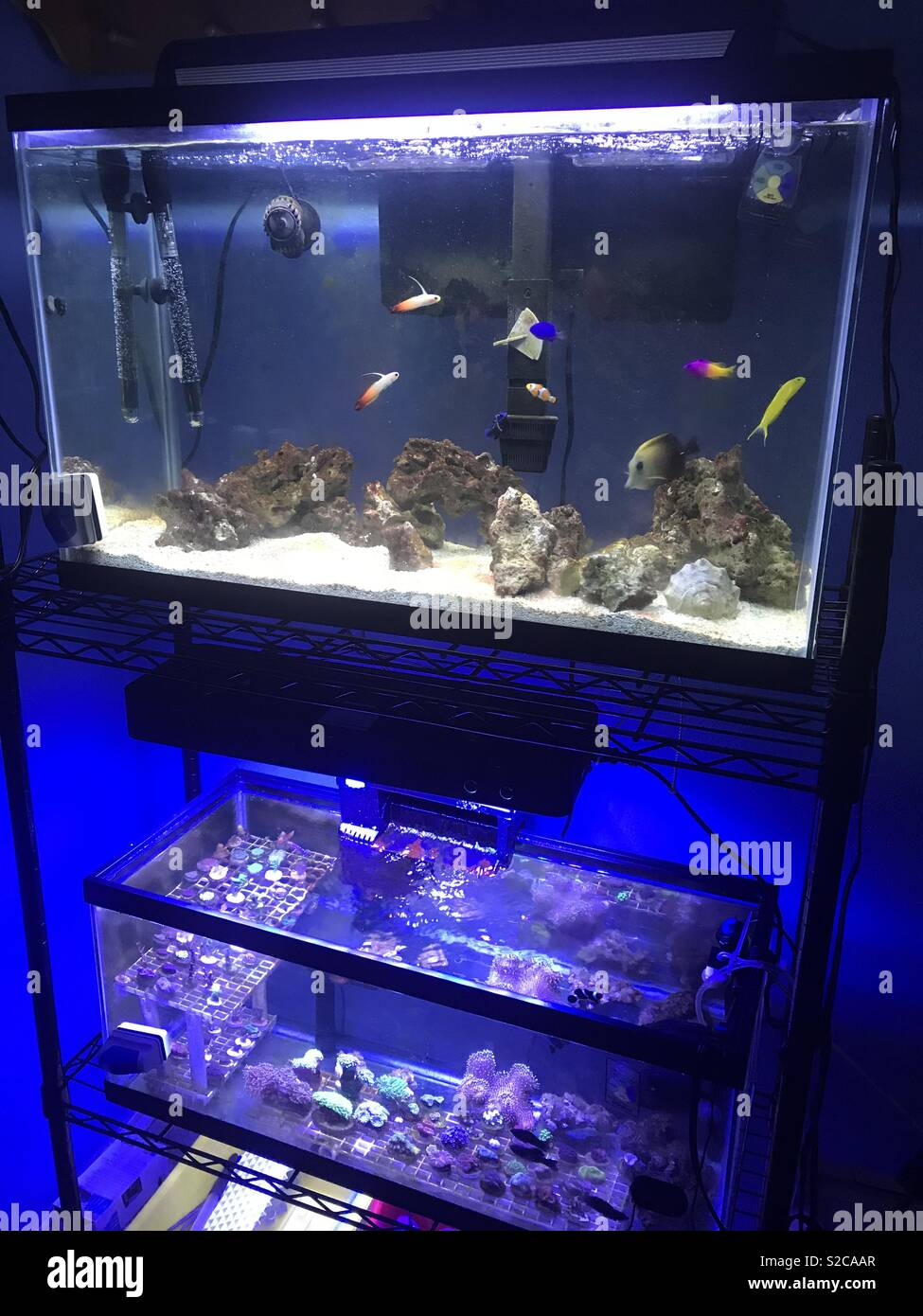 Aquarium - Stock Image