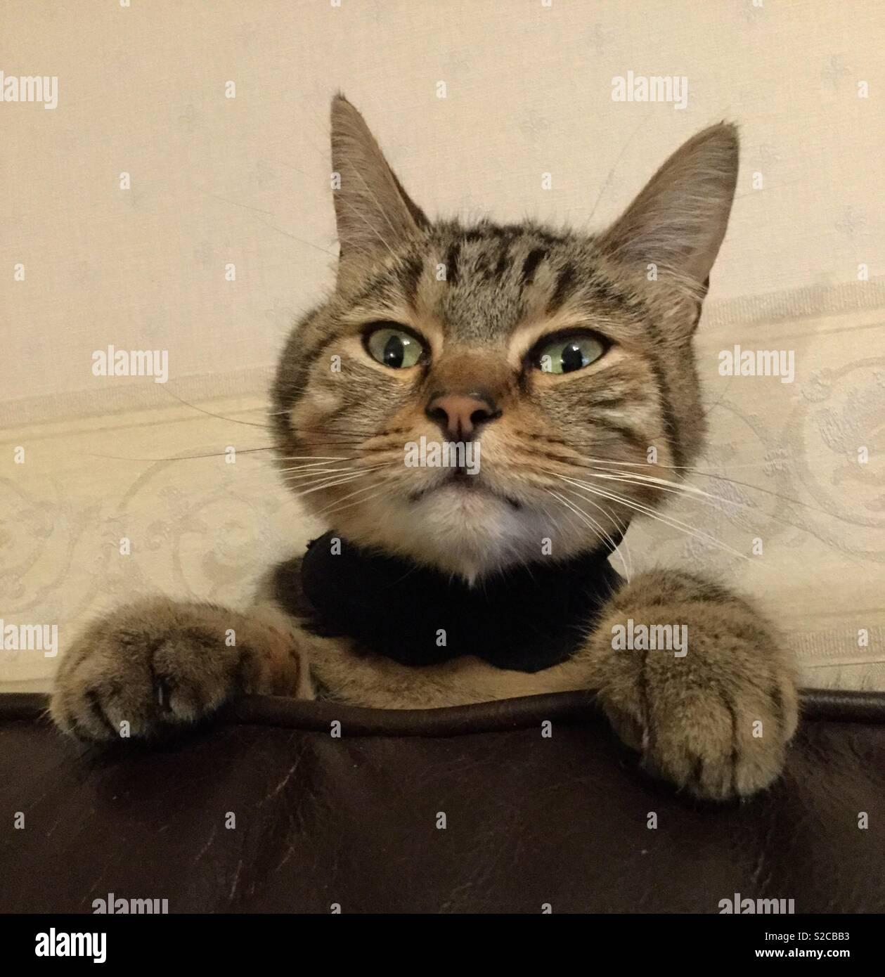 Disgruntled cat - Stock Image
