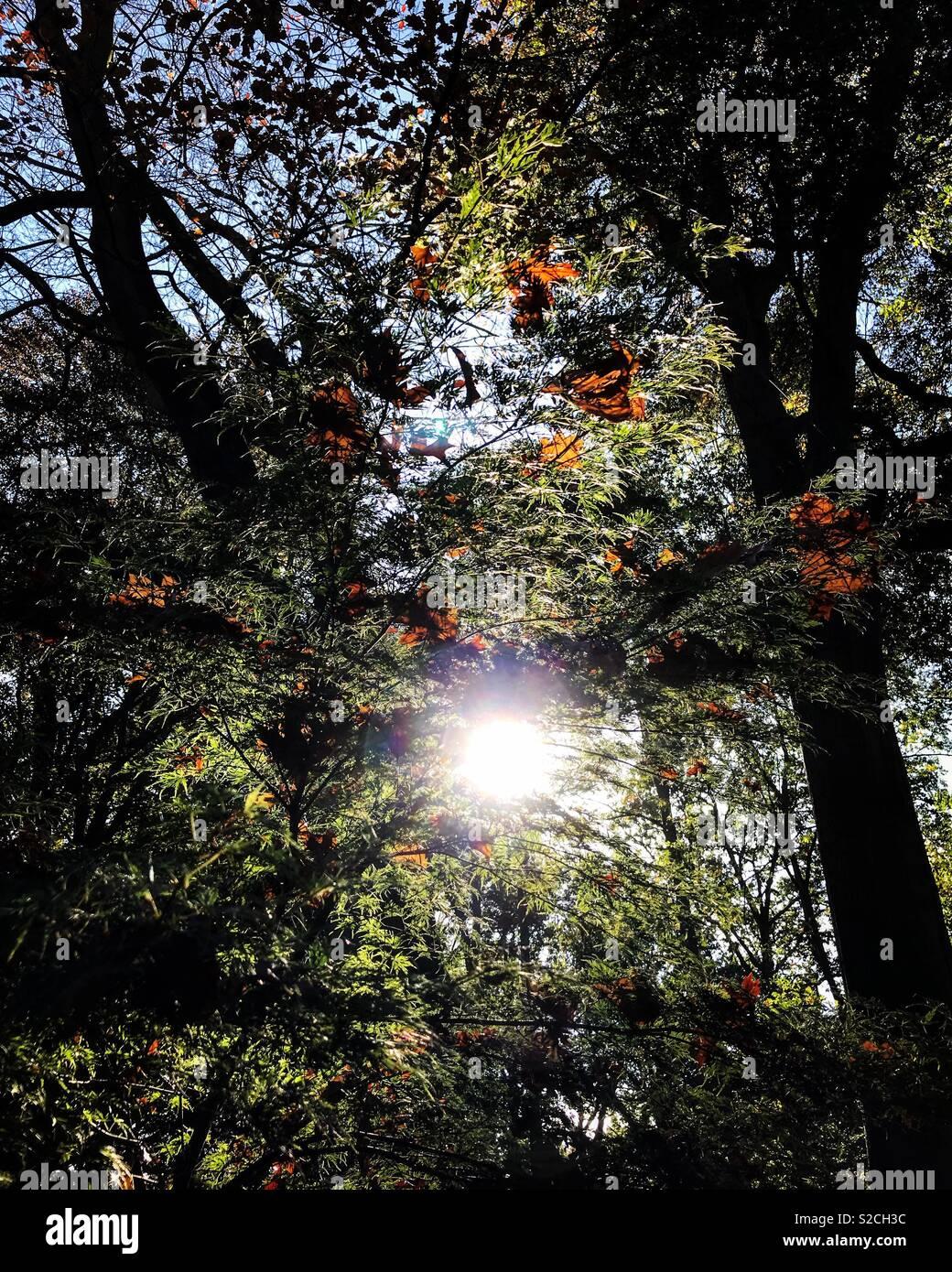 Dunham Massey gardens - Stock Image