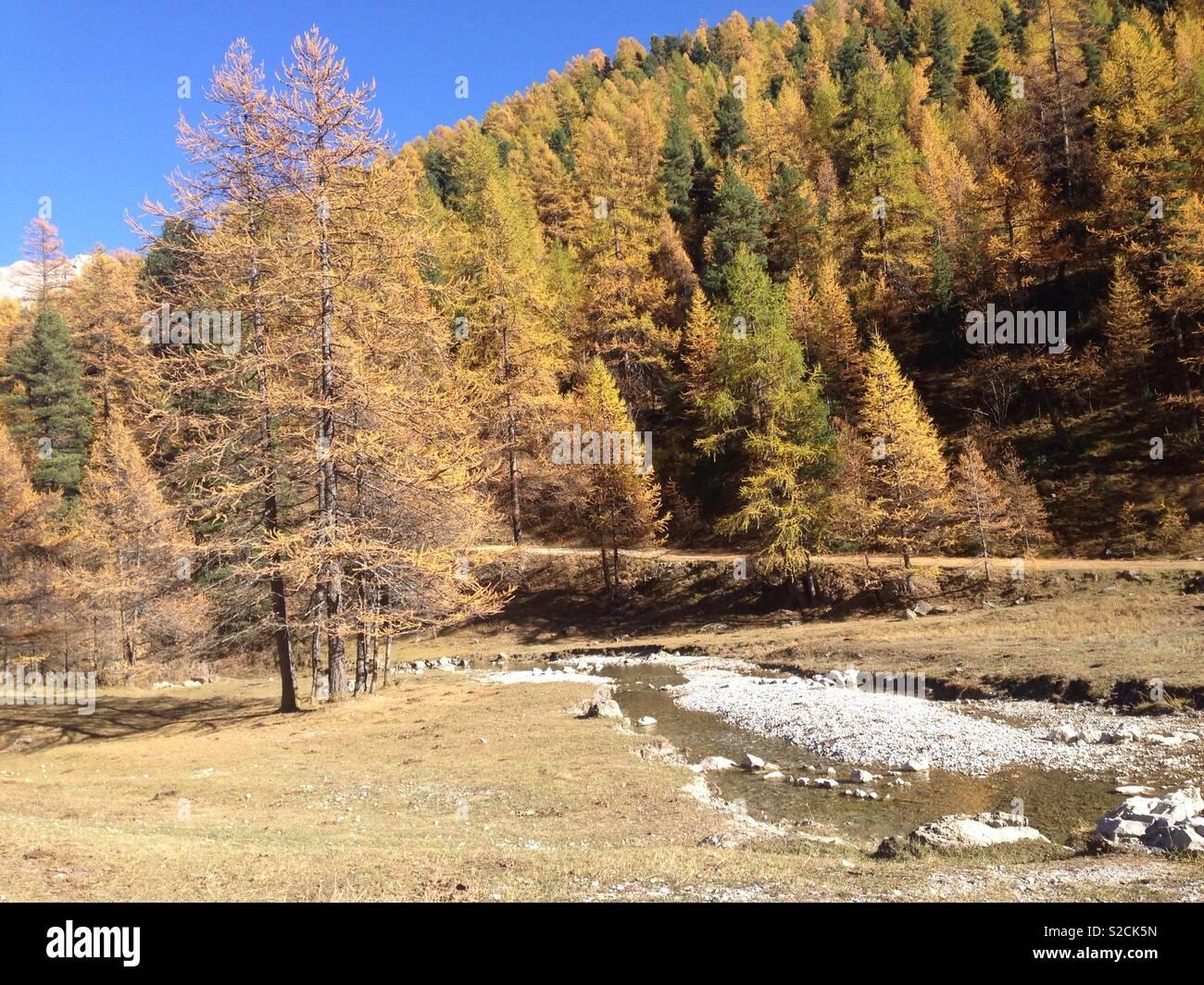 L'automne dans les Alpes - Stock Image