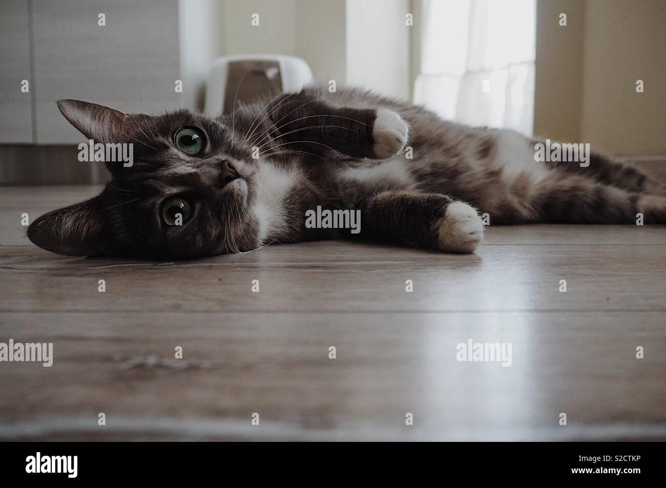 Cat lying down - Stock Image