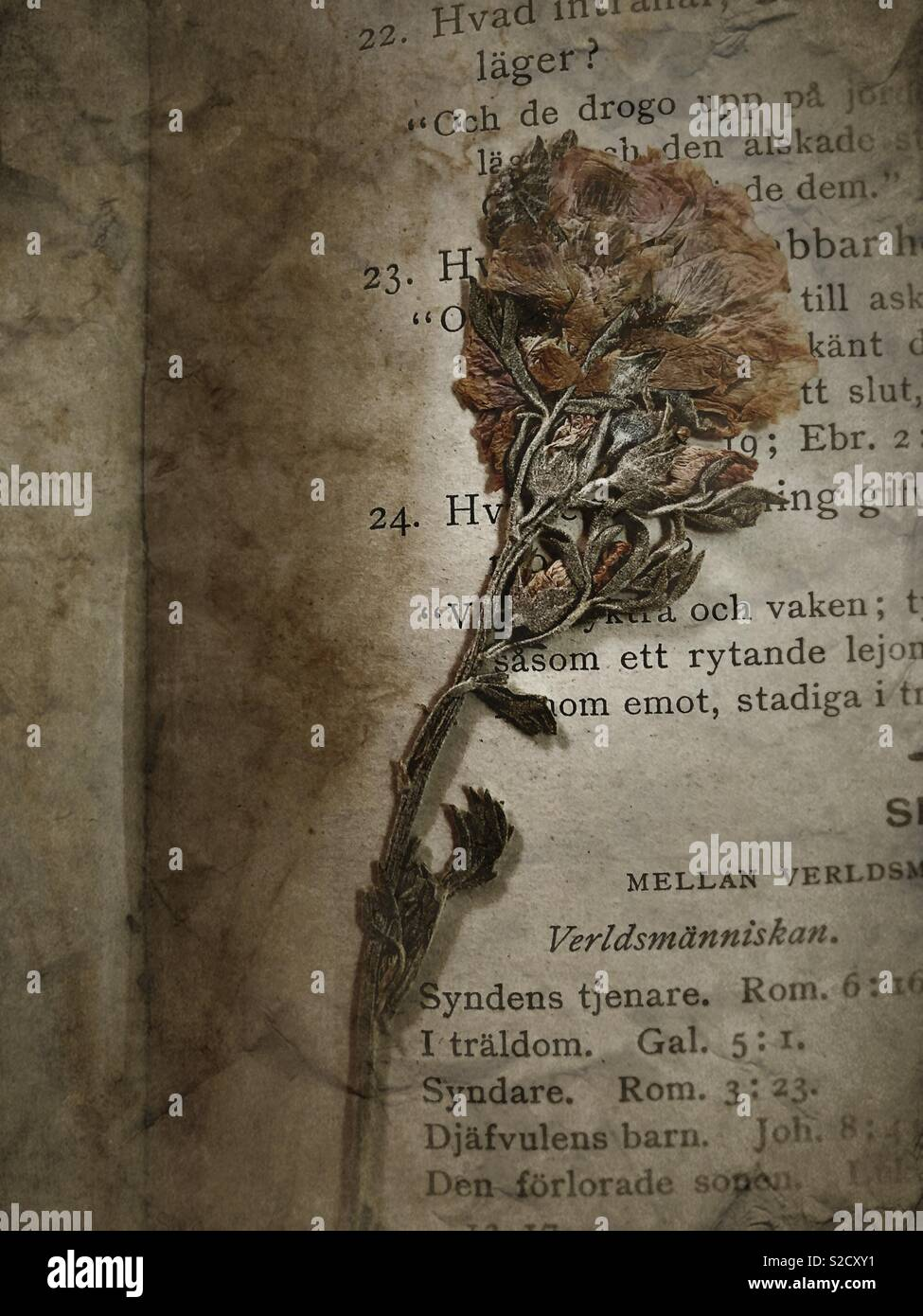 A pressed flower in an old book. - Stock Image