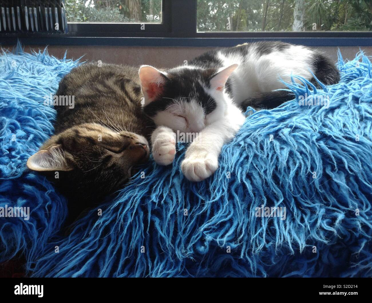 Brother & sister in deep sleep - Stock Image