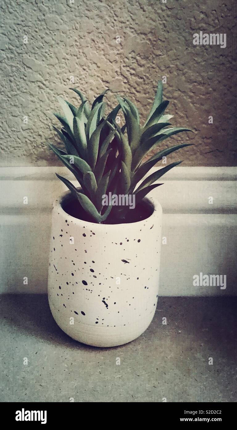 A Beautiful Dark Green Succulent Plant In Ceramic Vase Used As Home Decor
