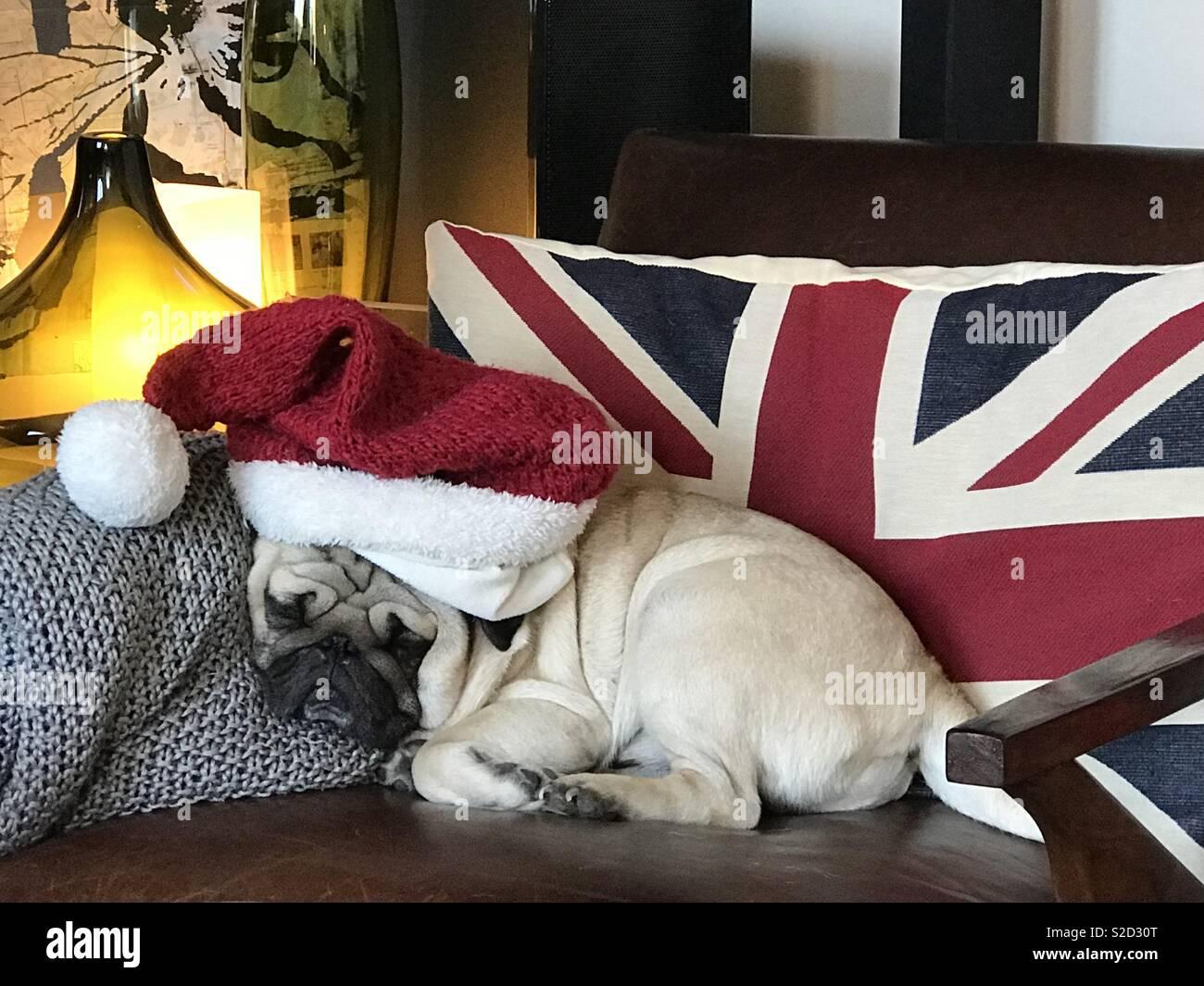Christmas sleepy pug - Stock Image