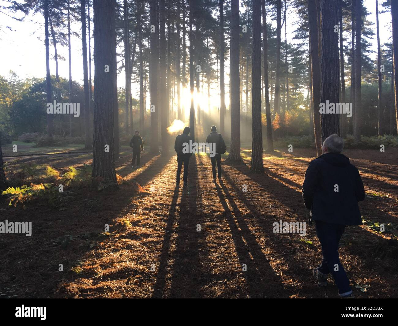 Morning light long shadows - Stock Image