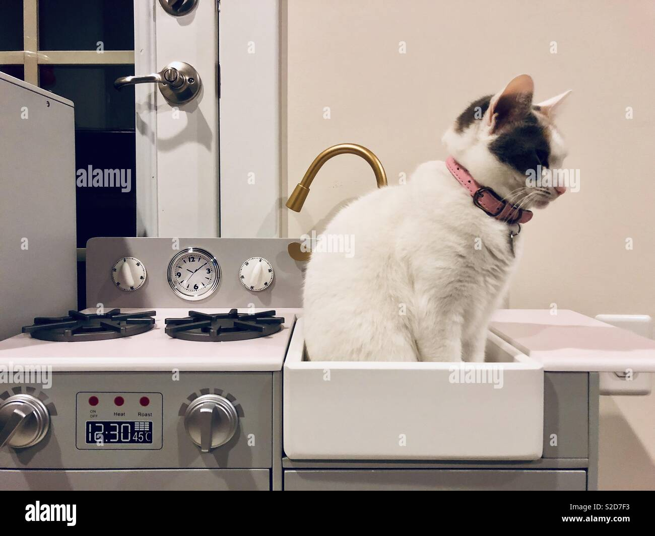 Cat sitting inside a play kitchen sink. & Cat sitting inside a play kitchen sink Stock Photo: 311307223 - Alamy