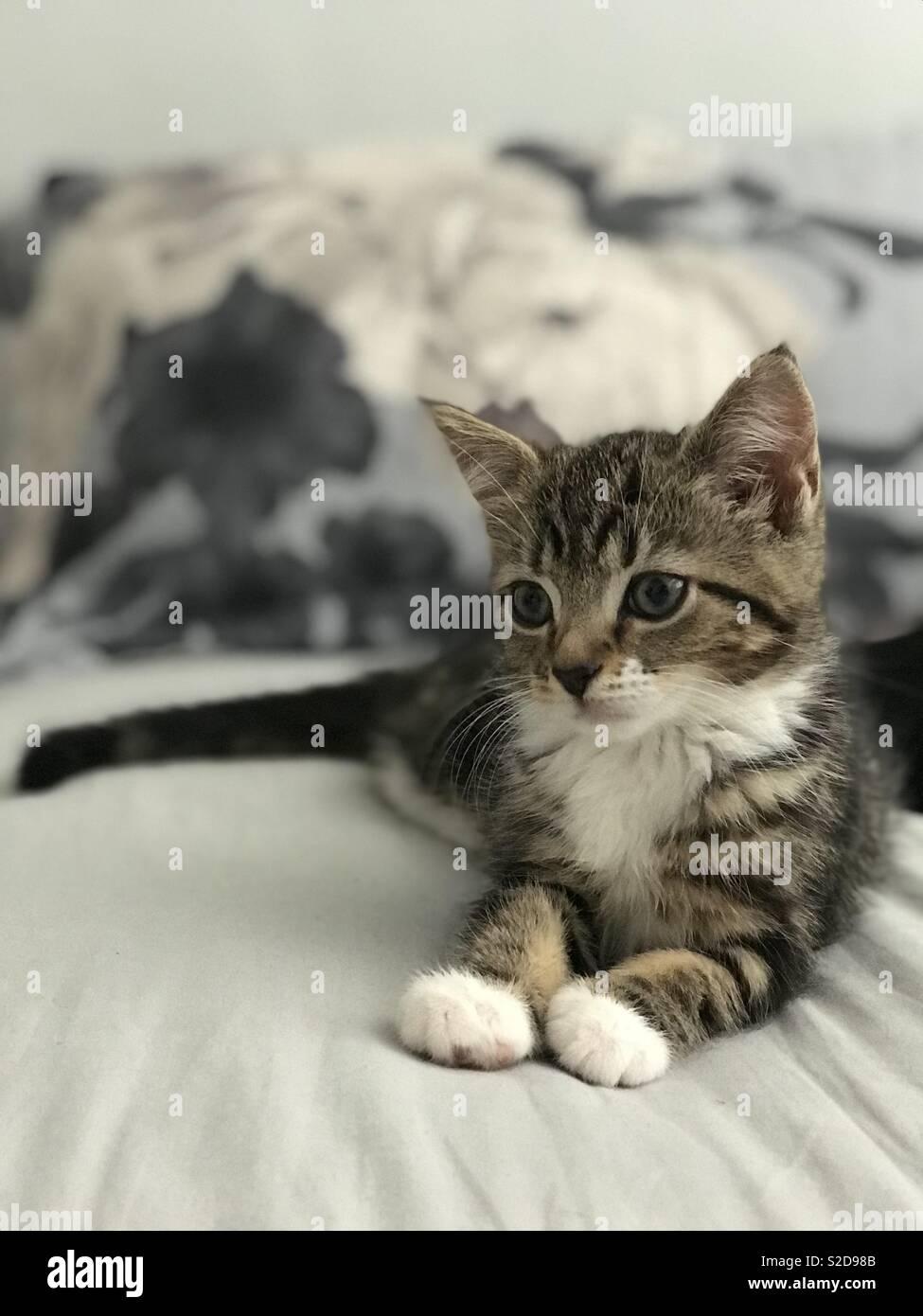 Sassy Kitten 4 - Stock Image